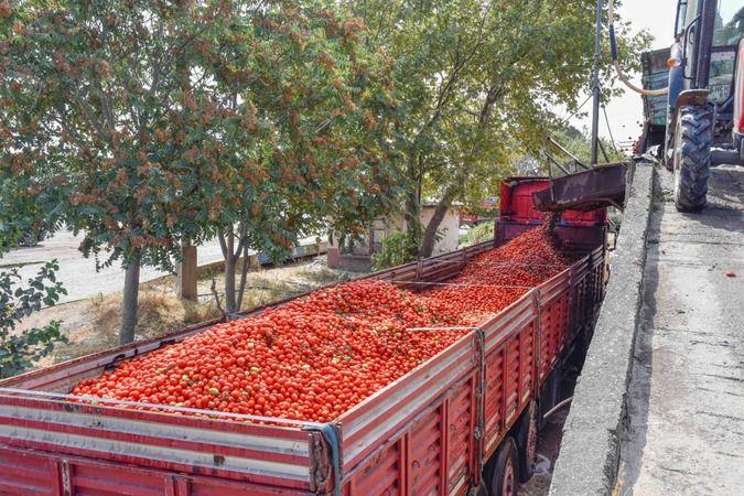 Bursa Karacabey ovasının salçalık domatesi