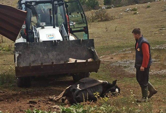 Bursa'nın İznik ilçesine bağlı Elmalı Mahallesinde bir hafta içerisinde 20 büyükbaş hayvanın kene sebebiyle öldüğü iddia edildi. Ölümler devam ederken