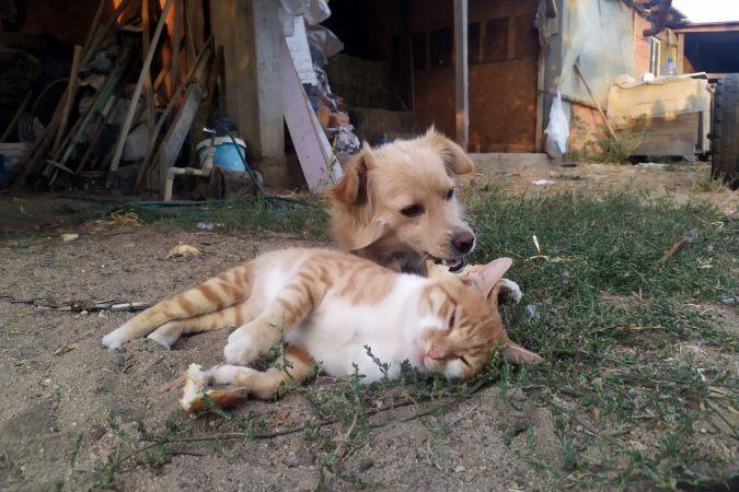 Edirne'de kedi ve köpeğin sevimli dostluğu