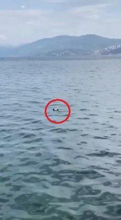 Bursa'nın Mudanya ilçesinde yaşanan olayda amatör balıkçıların oltasına martı takıldı.