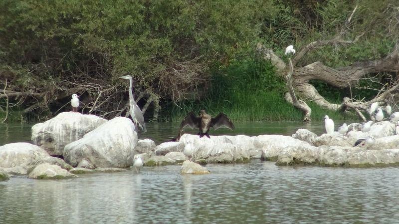 Dünyada bulunan küçük karabatakların üreme alanlarının başında gelen Uluabat Gölü'nde kuş türleri başta olmak üzere canlıların yaşama alanları gün geç