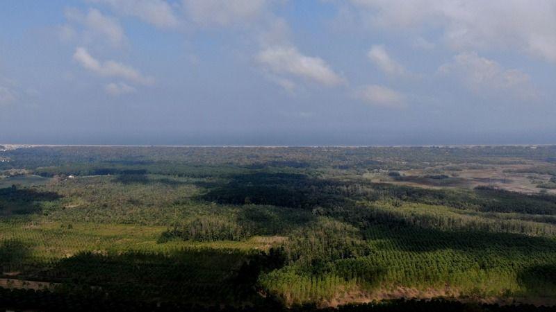 Doğal güzellikleri ile her mevsim büyüleyen Karacabey longoz ormanları sonbahar mevsiminde de bitki örtüsünün farklı tonları ile göz kamaştırıyor. Lon