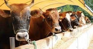 """5-9 Ekim tarihlerinde gerçekleştirilecek olan """"BURTARIM 2021 Bursa 18. Uluslararası Tarım, Tohumculuk, Fidancılık ve Süt Endüstrisi Fuarı"""" ile """"Bursa"""