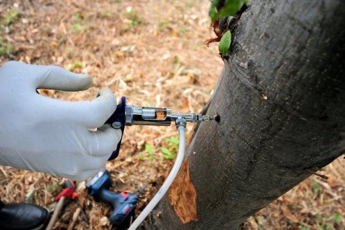 Ülke genelindeki ormanlarda etkili olan 'gal arısı'  ağaçlardaki meyve ve çiçek verimini yüzde 90'a kadar düşürüyor. Zararlı olan 'gal arısı' ile müca