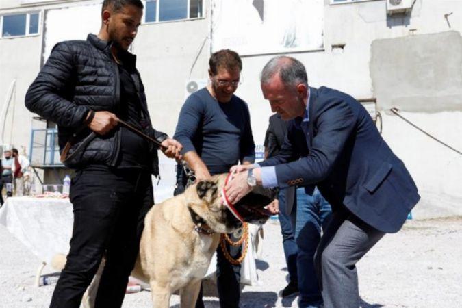 Bursa çoban köpekleri madalya için yarıştı