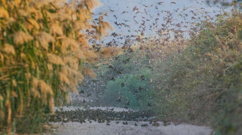 Havaların giderek serinlemesiyle birlikte sonbahar kendini iyice hissettirirken; Uluabat Gölü sazlıklarında doğa fotoğrafçısı Alper Tüydeş tarafından