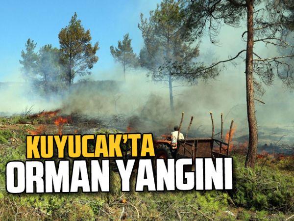 Kuyucak'ta orman yangını