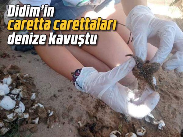 Didim'in caretta carettaları denize kavuştu