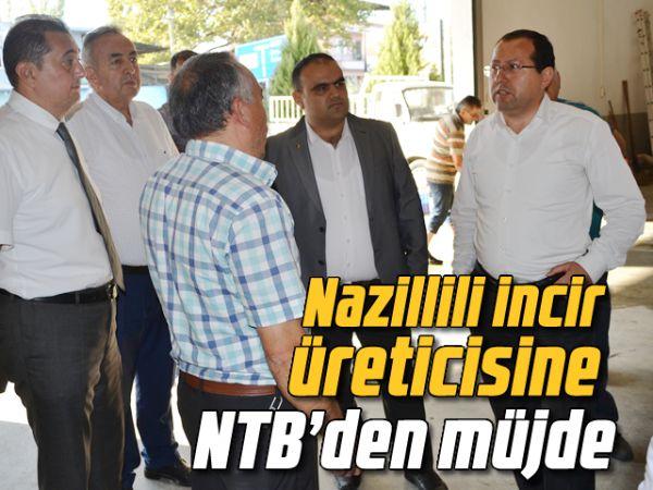 Nazillili incir üreticisine NTB'den müjde