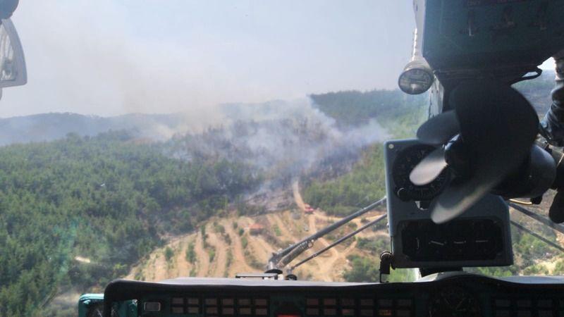 Aydın'da yine orman yangını