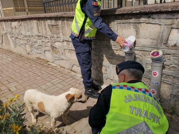 Nazilli'de jandarma ekiplerinin desteğiyle can dostlar beslendi