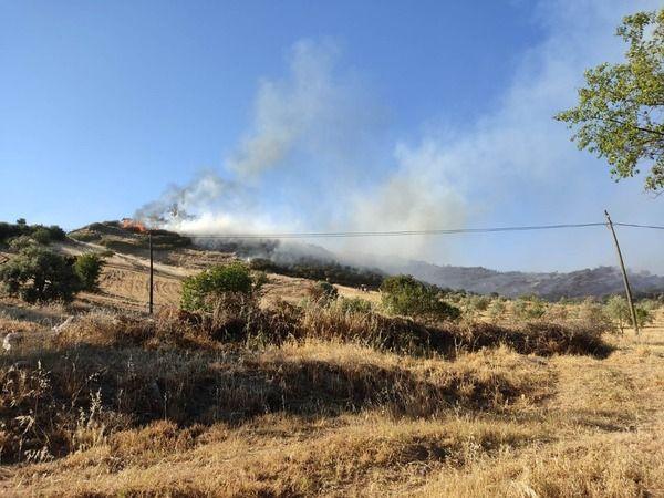 Nazilli'de 14 hektar ormanlık alan alevlere teslim oldu
