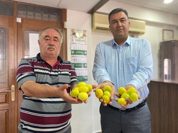 Nazilli'de ilk incir, resmi olarak tescillendi