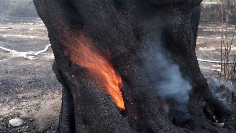 Zeytinlik yangınına sebep olan tarla sahibi serbest bırakıldı