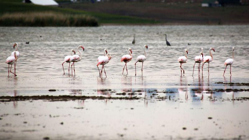 Ankara Gölbaşı sularında flamingolardan görsel şölen