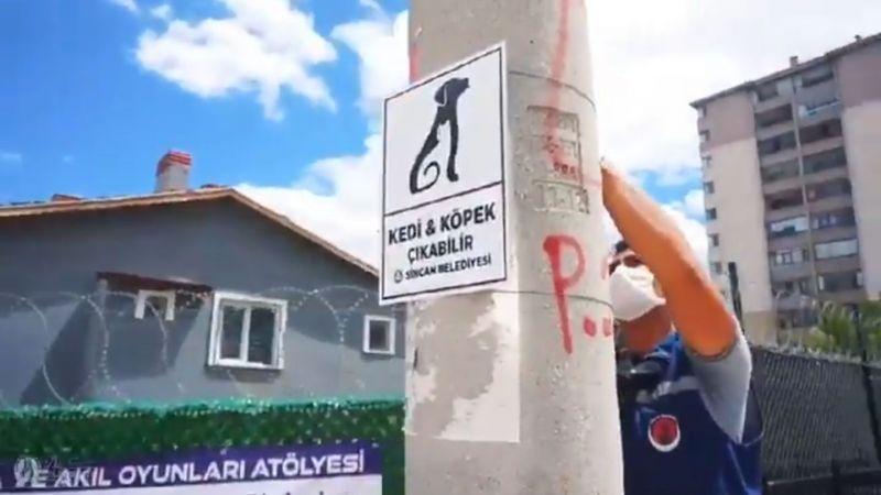 """Sincan'da sokak hayvanları için uyarı levhası! """"Dikkat! Kedi ve köpek çıkabilir"""""""