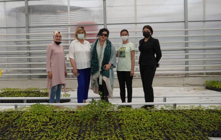 Keçiören Belediyesi serasında hem sebze hem çiçek üretiliyor