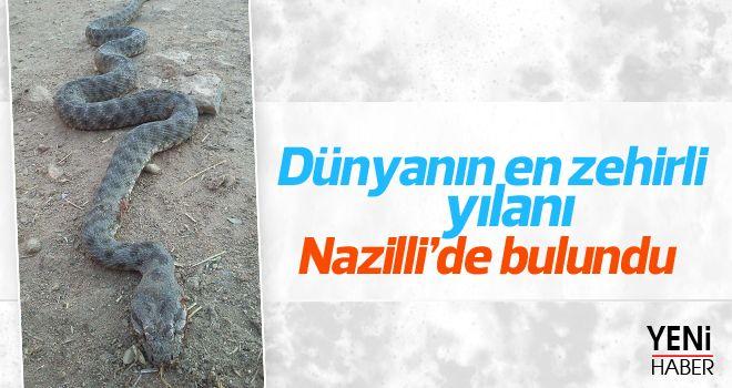 Dünyanın en zehirli Yılanı Nazilli'de görüldü!
