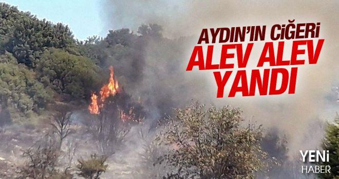 Aydın-Muğla karayolunda ormanı yaktılar