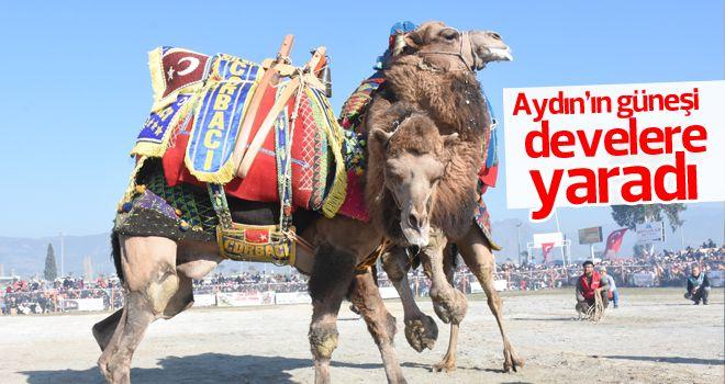 İncirliova'da deve güreşleri festivali yapıldı