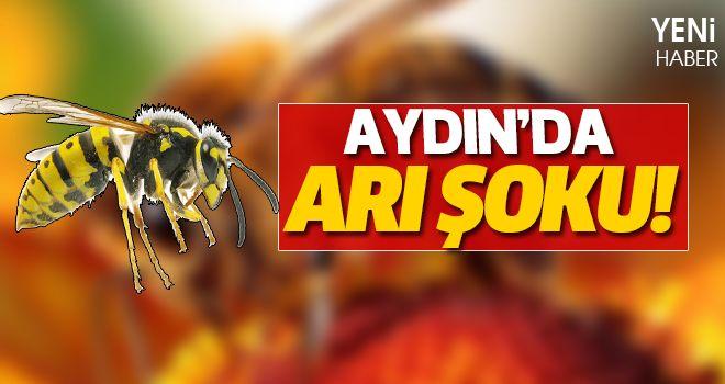 Aydın'da Arı Şoku!