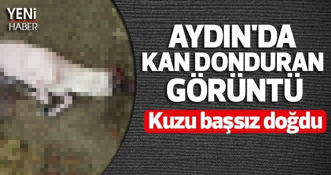 Aydın'da kan donduran görüntü
