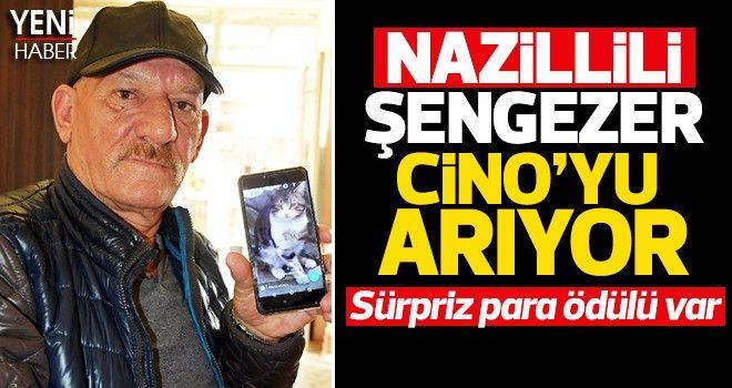 Nazillili Şengezer, Cino'yu arıyor
