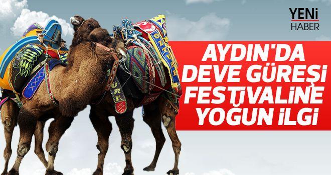 Aydın'da deve güreşi festivaline ilgi