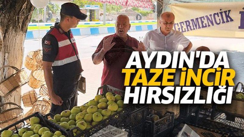 Aydın'da taze incir hırsızlığı