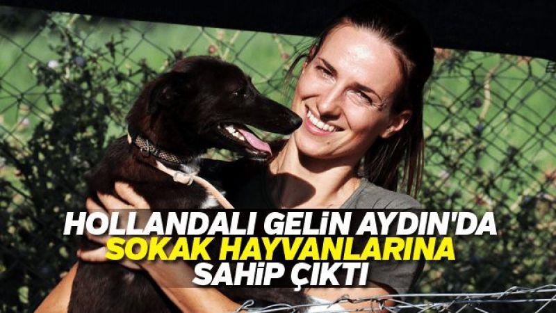 Hollandalı gelin Aydın'da sokak hayvanlarına sahip çıktı