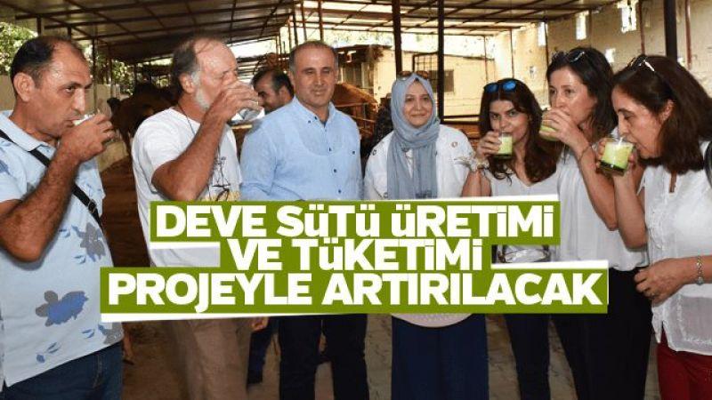 Deve sütü üretimi ve tüketimi projeyle artırılacak
