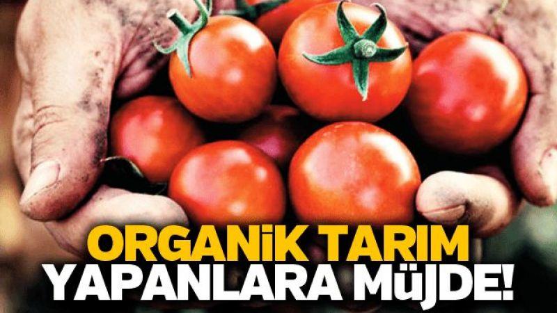 Organik tarım yapanlara müjde!