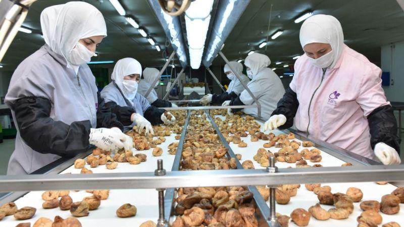 Aydın'dan yılın 12 ayı incir ihracatı yapılıyor