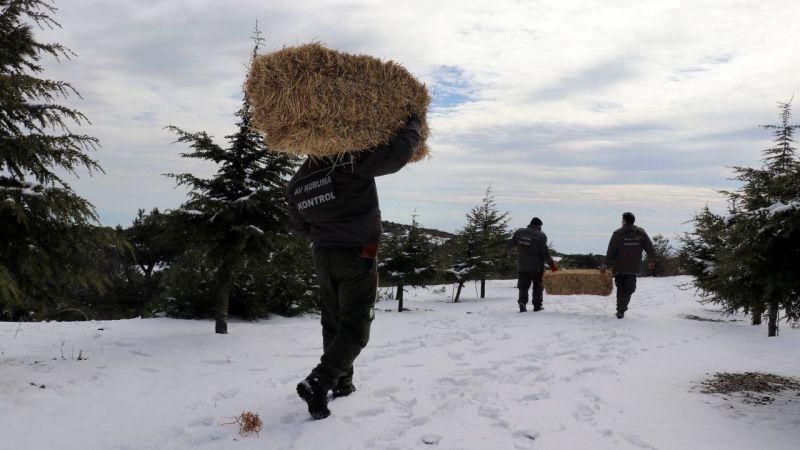 Aydın'da yaban hayvanları için doğaya yaklaşık 1 ton yem bırakıldı