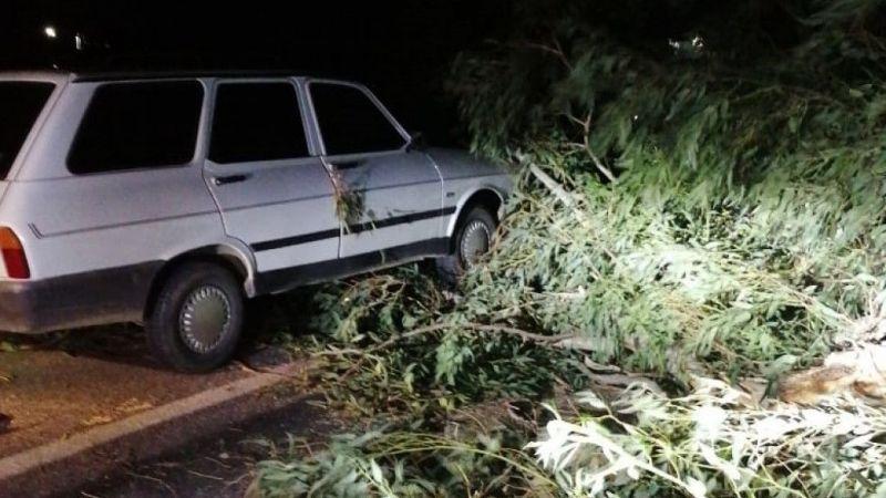 Aydın'da seyir halindeki araç, devrilen ağacın altında kaldı