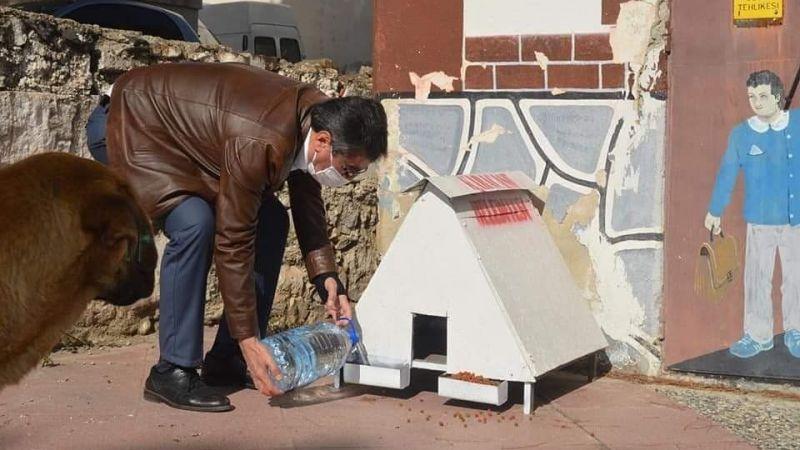 Başkan İnal sokak hayvanlarını unutmuyor