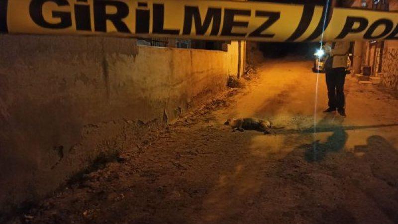 Nazilli'de hamile köpek vuruldu! İnsanlık öldü