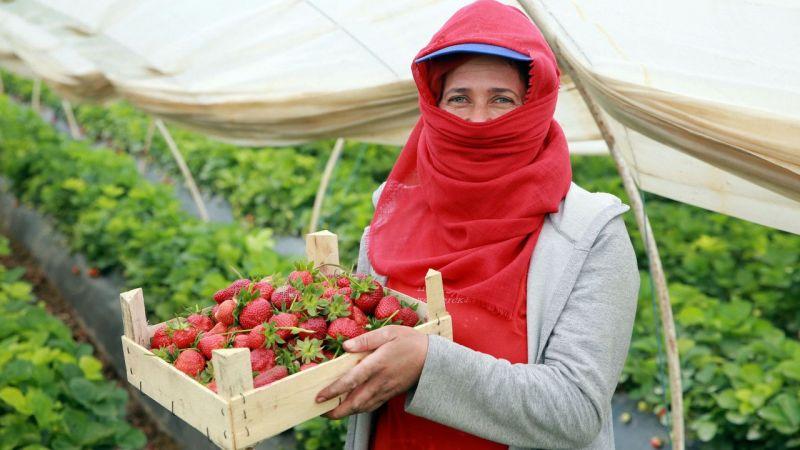 """Aydın'daki kadın işçilerin """"emek mücadelesi"""" devam ediyor"""
