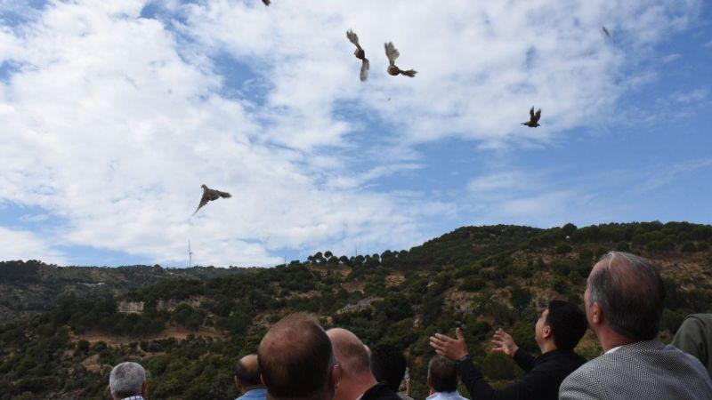 Aydın'da kınalı keklikler doğaya salındı