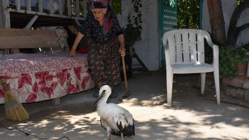 Aydın'da yaralı leylek yavrusu tedavi altına alındı
