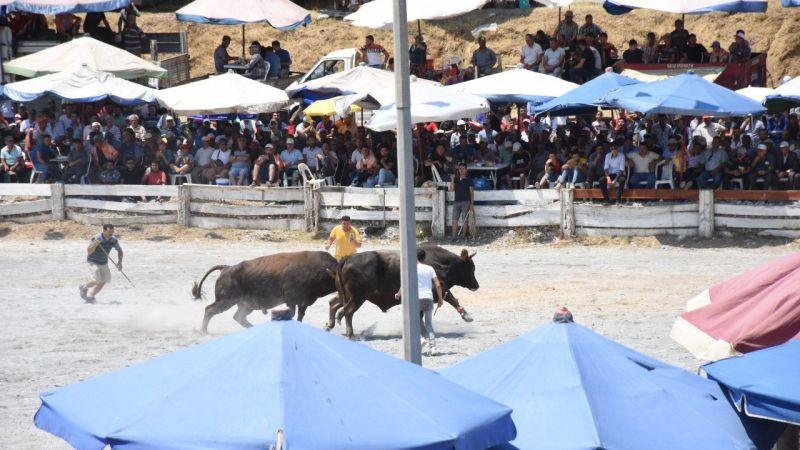 Aydın'da Boğa Güreşi Festivali yapıldı
