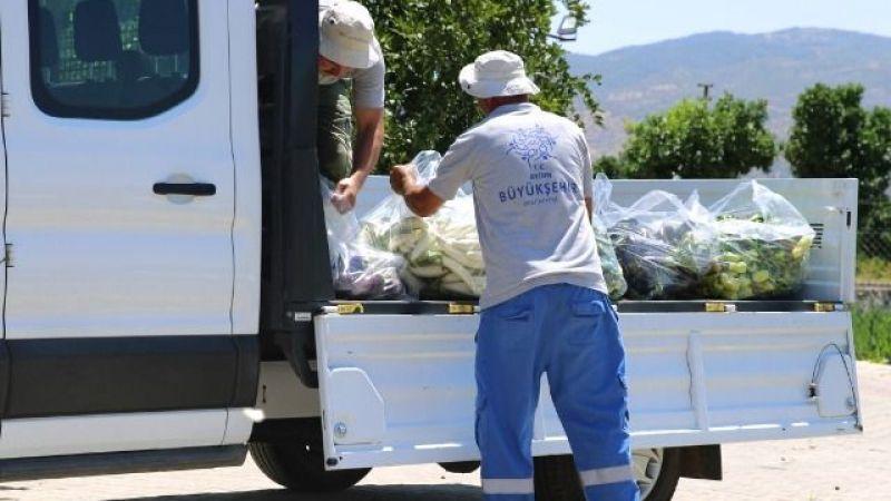 Çerçioğlu: Sağlıklı sebzeleri çocuklarımız için üretiyoruz