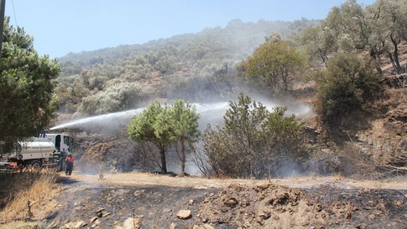 Aydın'da zeytinlik alanda çıkan yangın kontrol altına alındı