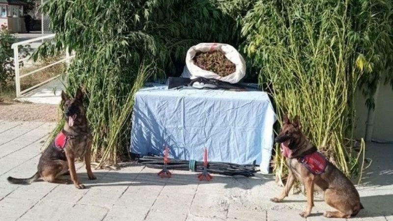 Düzenlenen uyuşturucu operasyonunda 1 kişi yakalandı