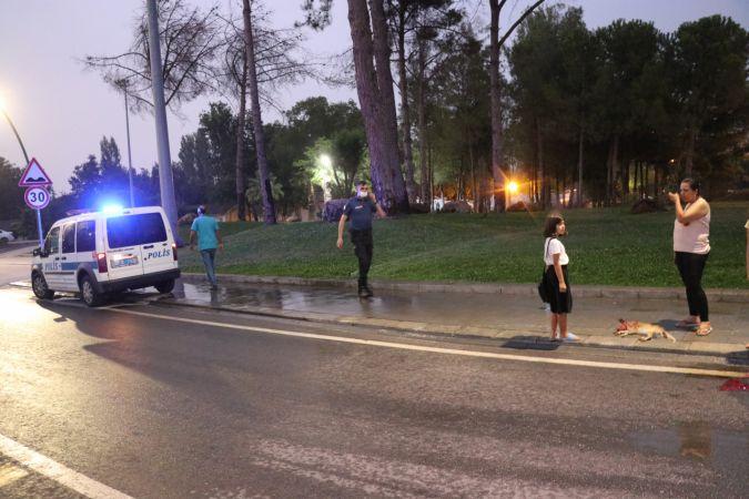 Aracıyla çarptığı köpek telef olan sürücü kaçtı