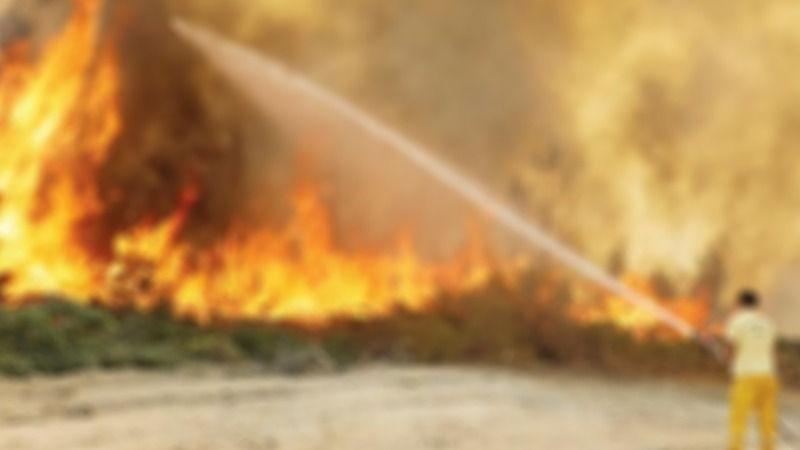 Son dakika: Germencik'te yangın