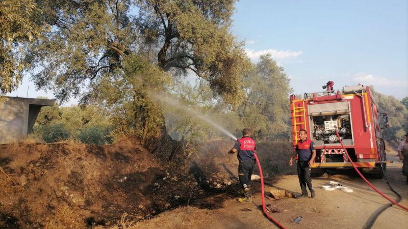 Nazilli'de zeytinlik alanda yangın çıktı