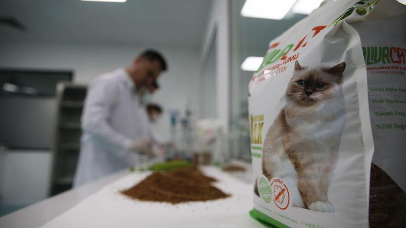 Aydın'da zeytin çekirdeğinden kedi kumu üretildi