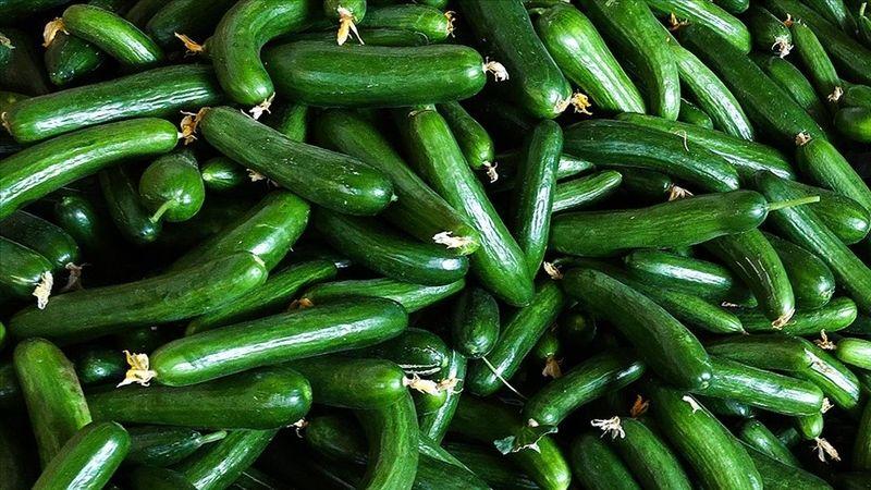 Ağustosta fiyatı en fazla artan 'salatalık' oldu