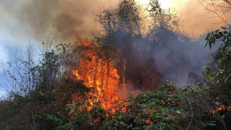 Güney Kıbrıs'ta orman yangın: 4 ölü